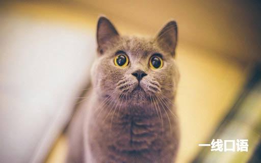 常用英语日常交流口语8000句(十四)养宠物 (1).jpg