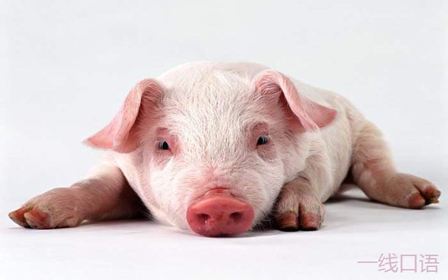 猪的英文竟有五种说法,并且大部分是贬义! (2).jpg